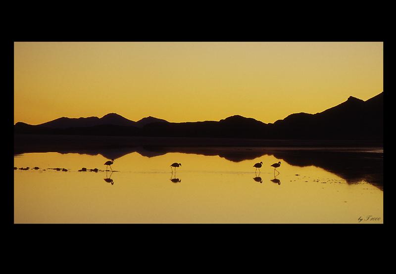 Flamingos im Abendlicht