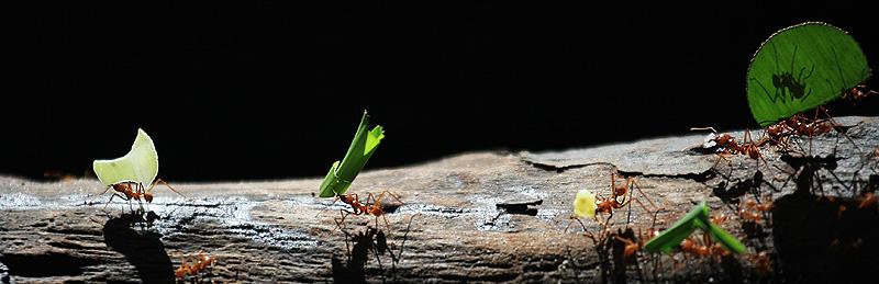 Ameisen02